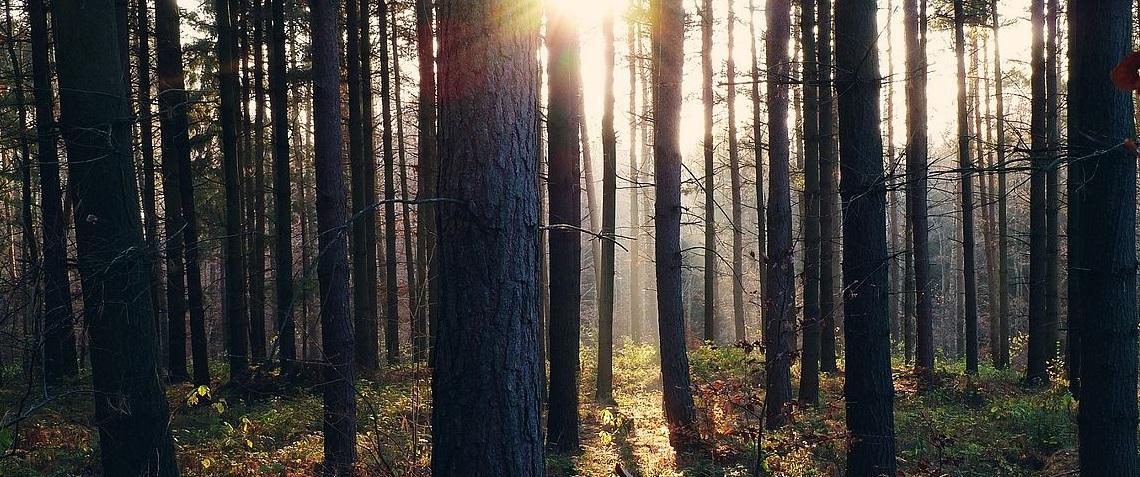 Bild vom Wald